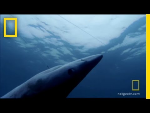 Shark Fin Soup | National Geographic