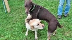 Hundesprache verstehen 3 – Freund oder Feind nach SNOPUS® (DVD Trailer)