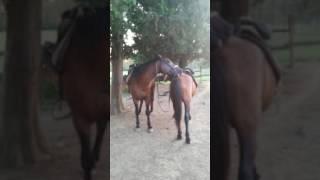 Любовь лошадиная