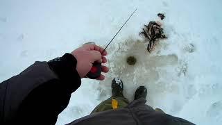 Ловля окуня на зимнюю блесну на озере Песочное 1