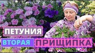 ПЕТУНИЯ вторая прищипка. Бутоны и цветочки- обрывать или нет?