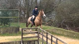 Cross Country Schooling - Flying ponies! (and riders haha).