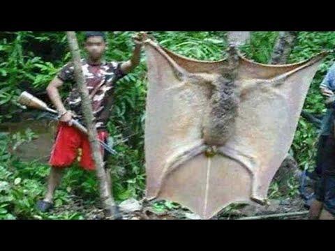 أكبر 10 مخلوقات برية في العالم !!
