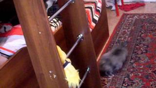 Ангорский кролик vs кошка