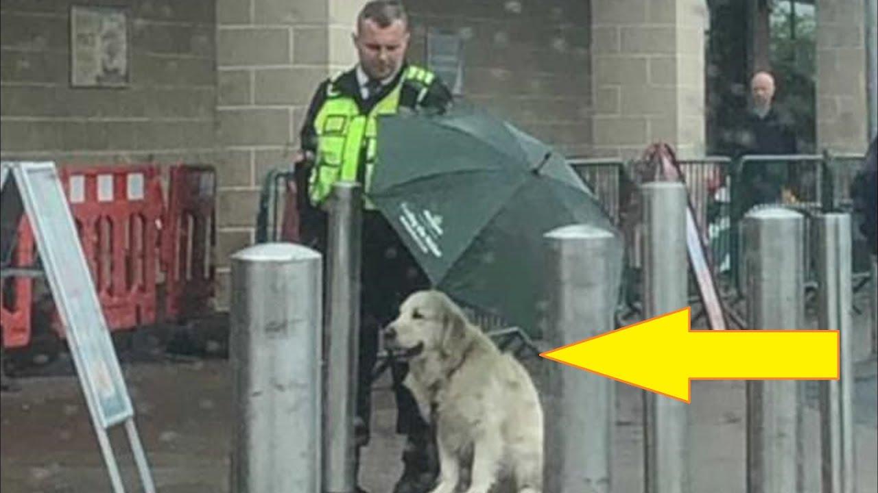 Собака мокла под проливным дождём, но то что сделал охранник, не передать словами