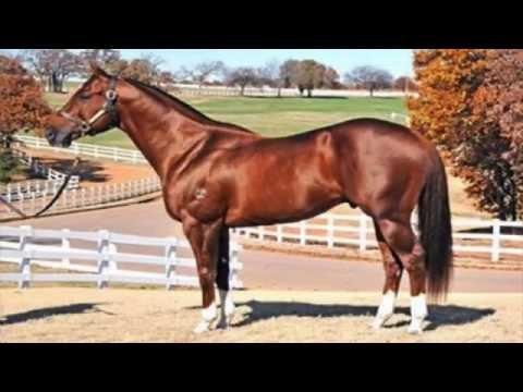 Fotos de caballos hermosos para facebook