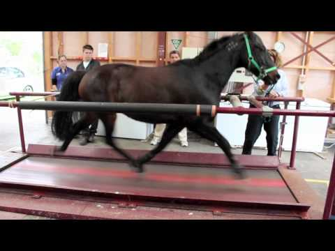 Horse On A Treadmill