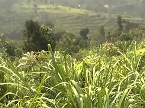 punclut-dataran-tinggi-(-upland-),-bandung-indonesia