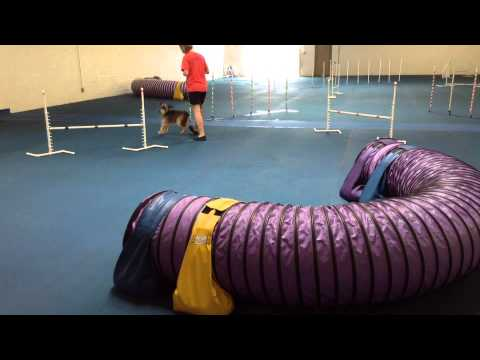 Using Tricks To Motivate Your Agility Dog