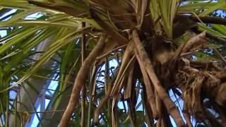 видозміни кореня