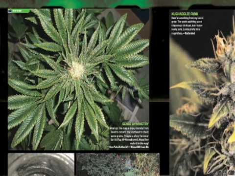 HIGH TIMES Presents: 2010 Indoor Grow Special