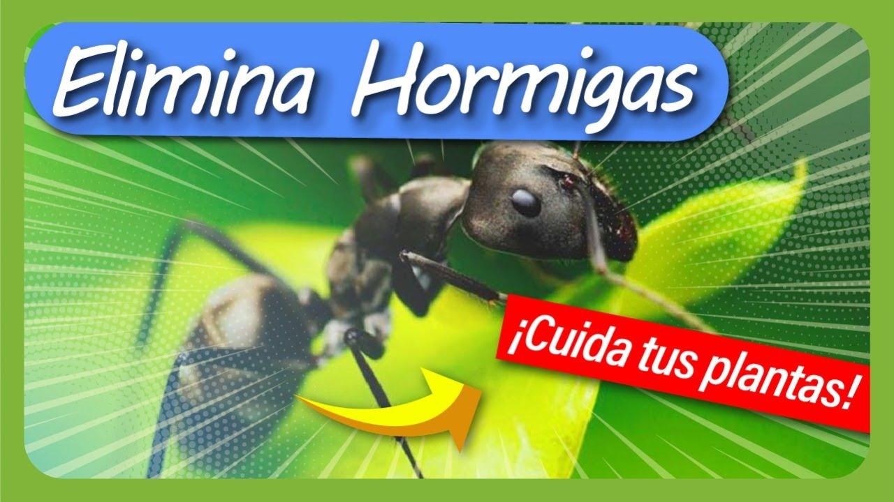 Cómo eliminar HORMIGAS de la HUERTA / Adiós a las hormigas