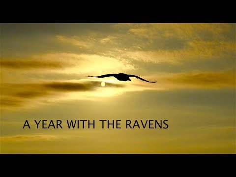 A Year With The Ravens