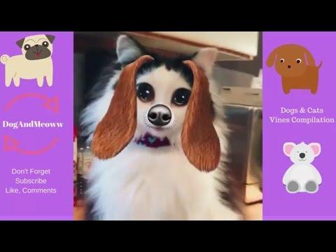 Best Cat & Dog Vines Compilation (Week-1) - October 2016