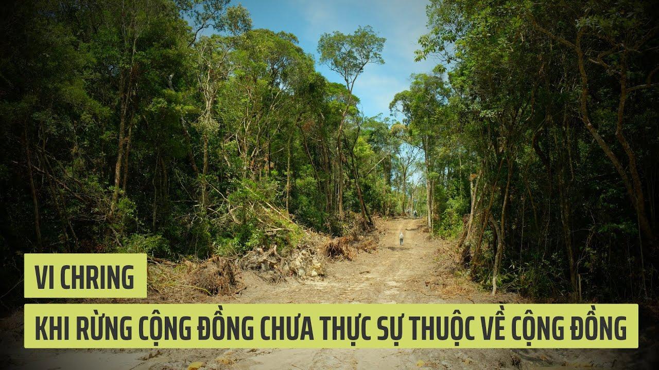 Vi Chring - khi rừng cộng đồng chưa thực sự thuộc về cộng đồng -  ThienNhien.Net | Con người và Thiên nhiên