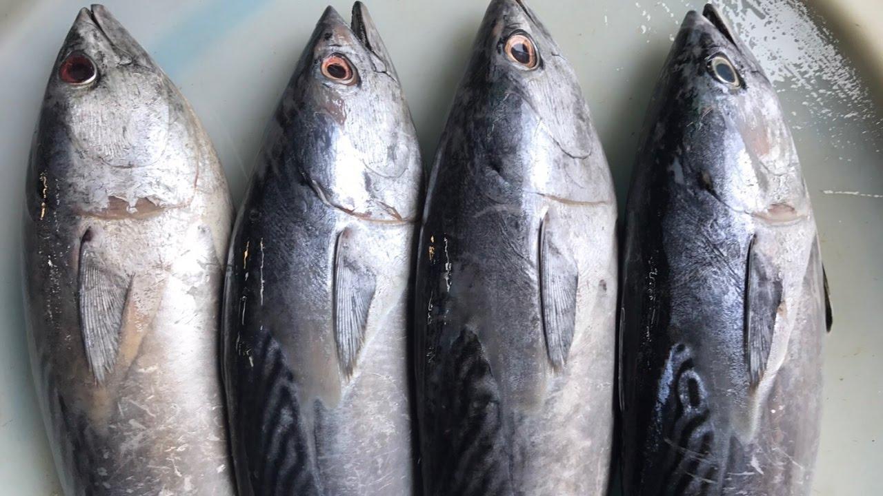 จุ๊จุ๊ ออนทัวร์ EP:158 วิธีเลือกซื้อปลาโอ