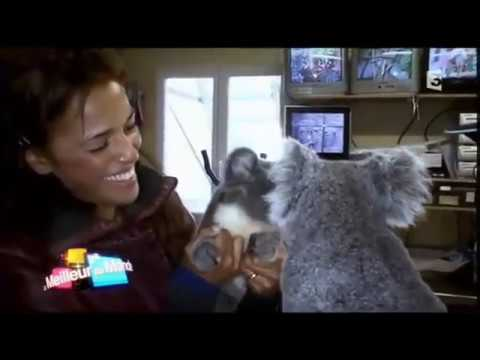 Youtube: Nâdiya – Souvenir Zoo de Beauval #Koalas #Australie (France 3 TV)