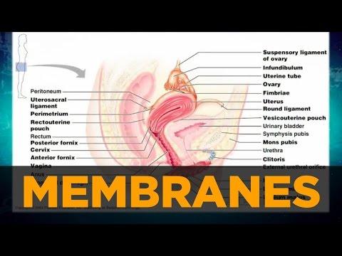 Female Hormone Imbalances & Mucous Membranes