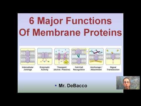 6 functions of plasma membrane