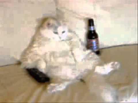 Movie Key Largo Kitty.wmv