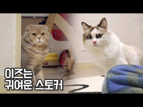 고양이 이즈는 귀여운 스토커