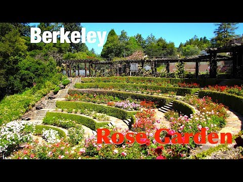 Berkeley Rose Garden