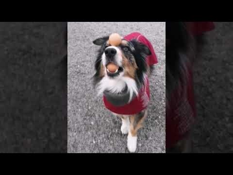Talented Dog Does Impressive Balancing Act || ViralHog