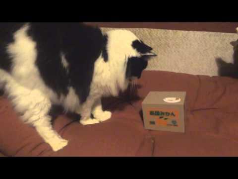 Stupid cat hates cat money box