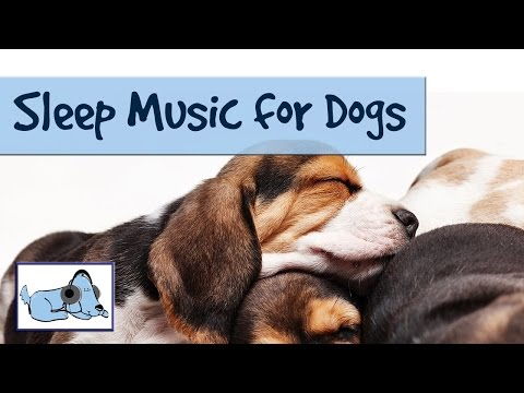 sleep-music-for-dogs-and-puppies!-relaxing-music-for-dogs-by-relaxmydog---try-today!-amazing!