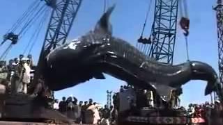 Самая большая акула в мире. Посмотри на этот ужас