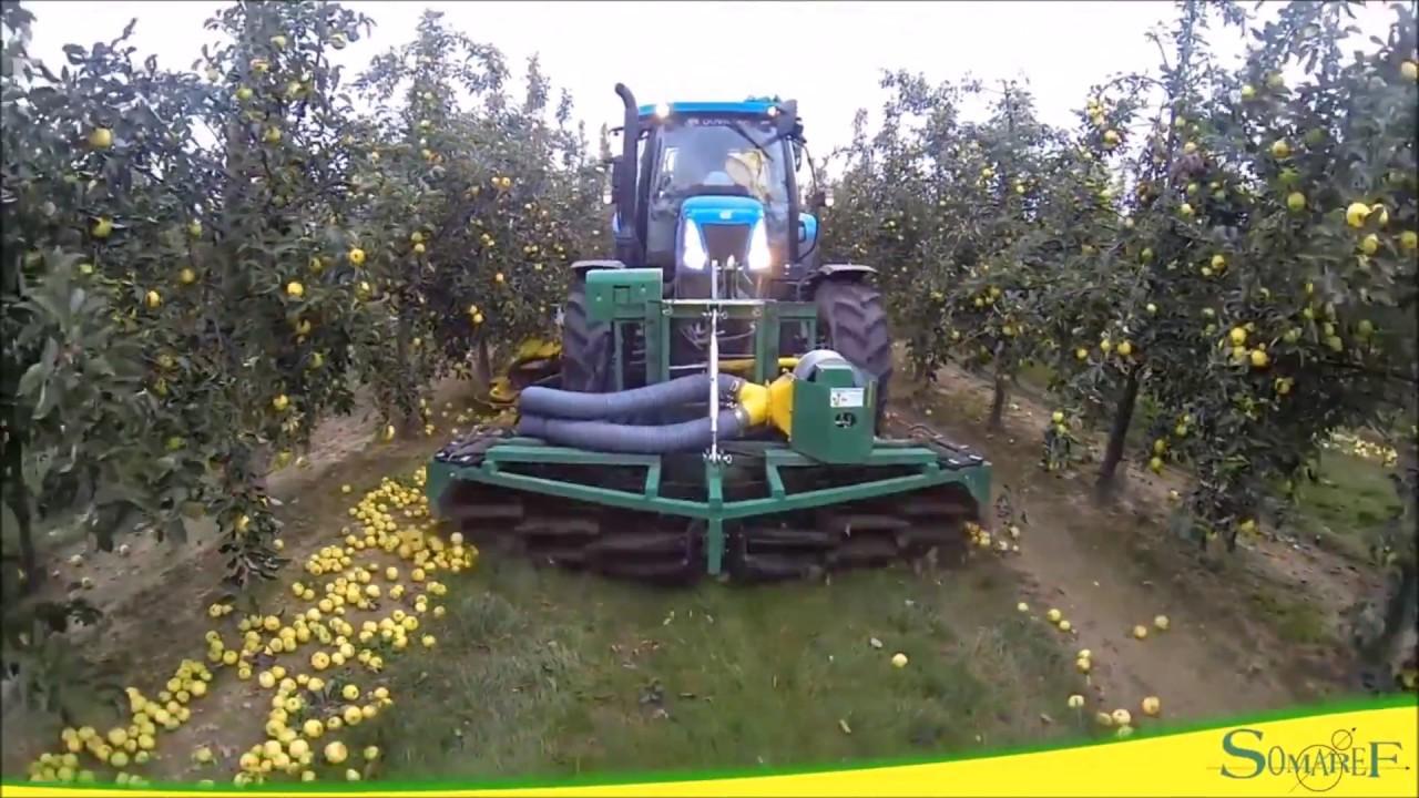 Machine de recolte pommes a cidre au sol mvtec installee - Machine pour ramasser les pommes ...
