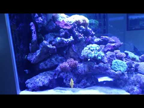 How to add groups of fish to your aquarium!
