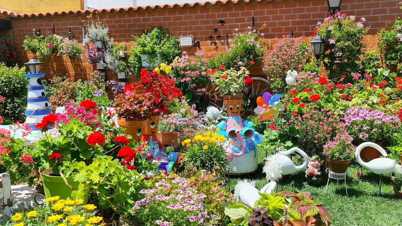 Decoro mi patio con hermosos cisnes de calabazas  queréis ver la planta de la calabaza? La enseño