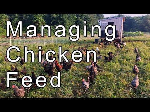 Managing Chicken Feed on Farm