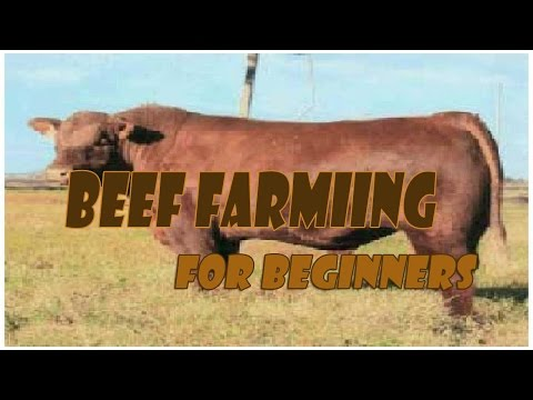 Beef Farming For Beginners
