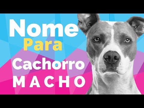 NOME PARA CACHORRO