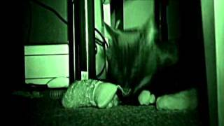 Cat + darkness + night vision + Infrared video