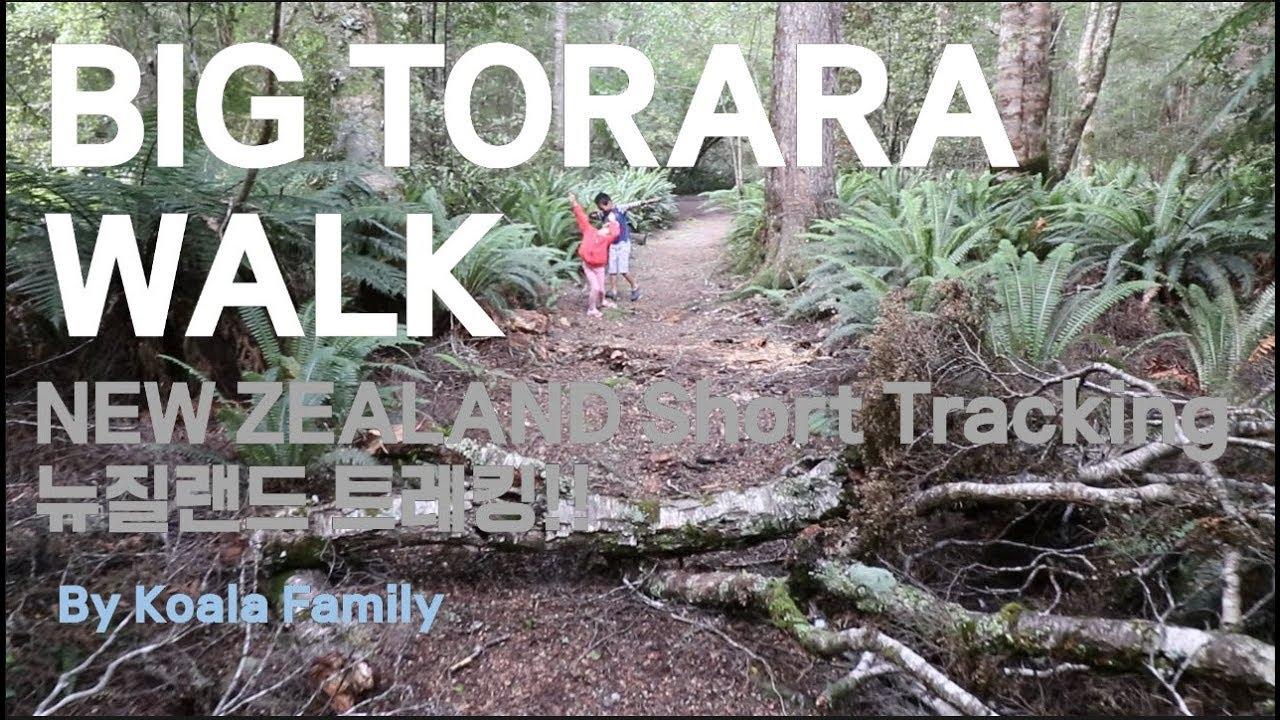 Download 뉴질랜드 남섬🐨 한국인 최초방문(?) BIG Torara walk 남섬 짧은 트레킹| koala family 코알라 가족 이야기