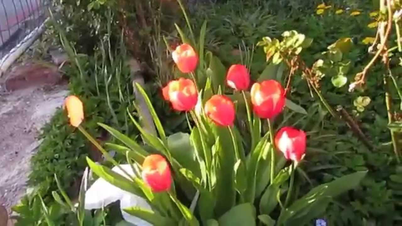 Mon Jardin En Avril mon jardin ce mardi 14 avril 2015