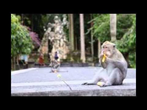 sangeh---bali-|-tempat-wisata-di-indonesia