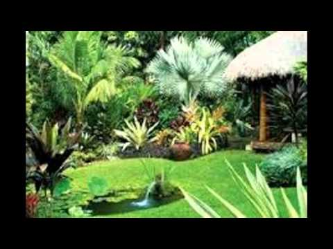 Tropical Landscaping Ideas - YouTube