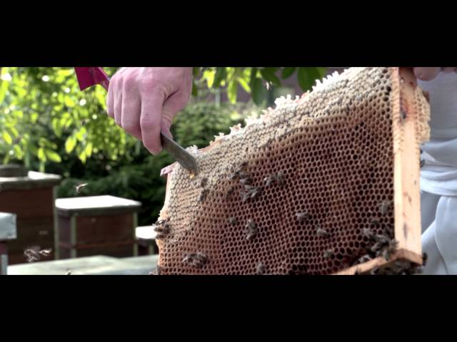 Bienenhaltung Honigernte 2017
