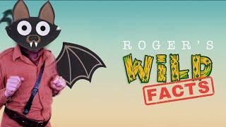 Roger Wild [Wild Facts] - Fruit bats