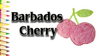 How to Draw a Barbados Cherry - Acerola Cherry Fruit Drawings - SLD