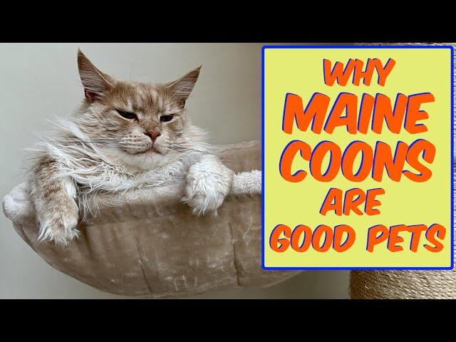 Are Maine Coons good pets? Are Maine Coons good with children?