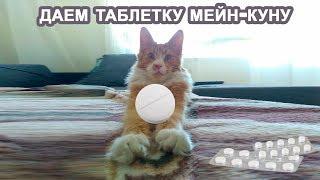 Как дать таблетку коту мейн-куну? Вкусно и полезно!
