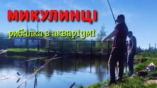 Рибалка в Микулинцях 2021