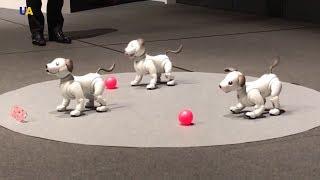 В Японии представили новую модель собаки-робота