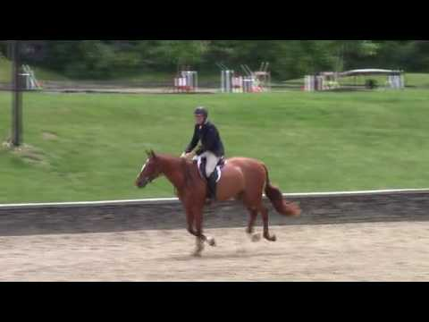 Video of Soltiste ridden by Tess Lenihan from ShowNet!