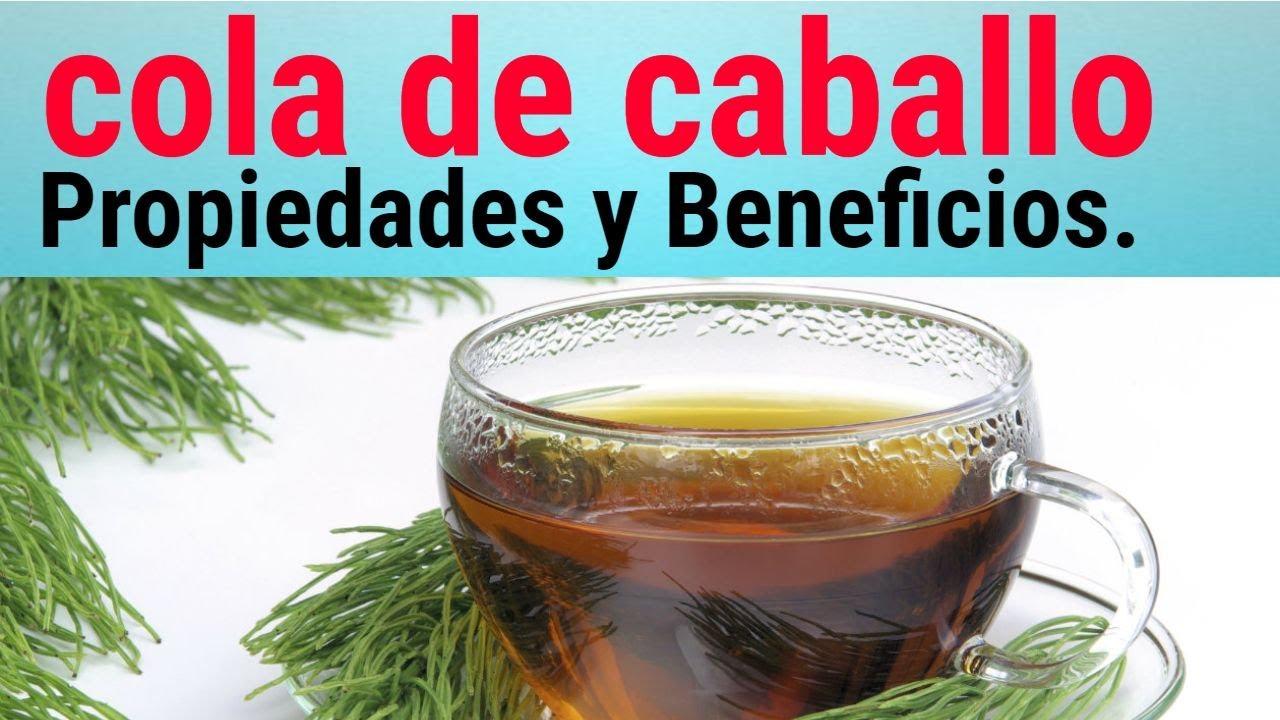 Planta Medicinal Cola De Caballo Beneficios Y Propiedades Para La Salud Youtube